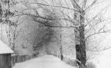 Pärnaallee talvel