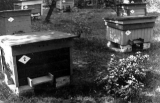 Mesila rajati 1945. a
